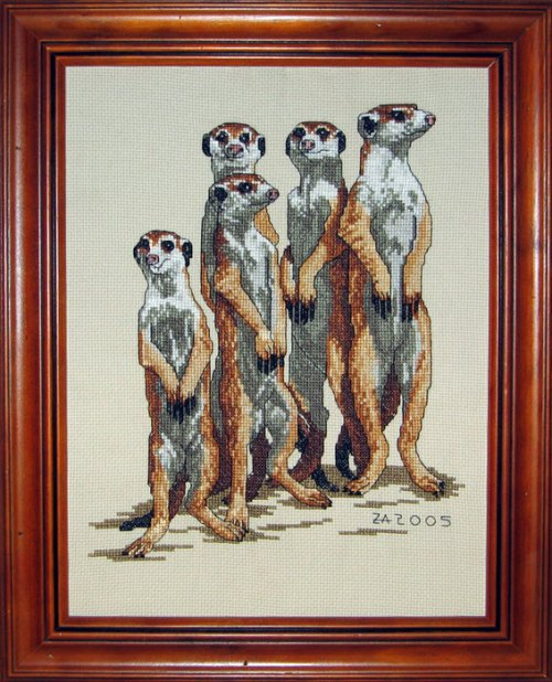 my-meerkats.jpg