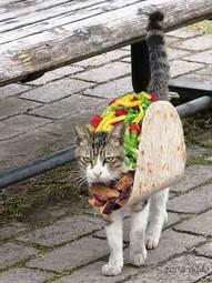 1193000424-taco_cat.jpg